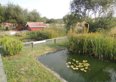 bassin-refuge-tortue
